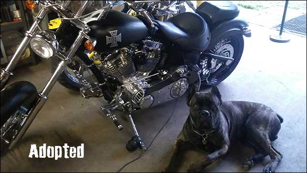 Large Dogs Laying Next To Bikes